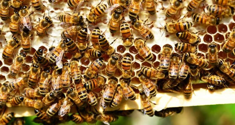 Bijen bestrijden