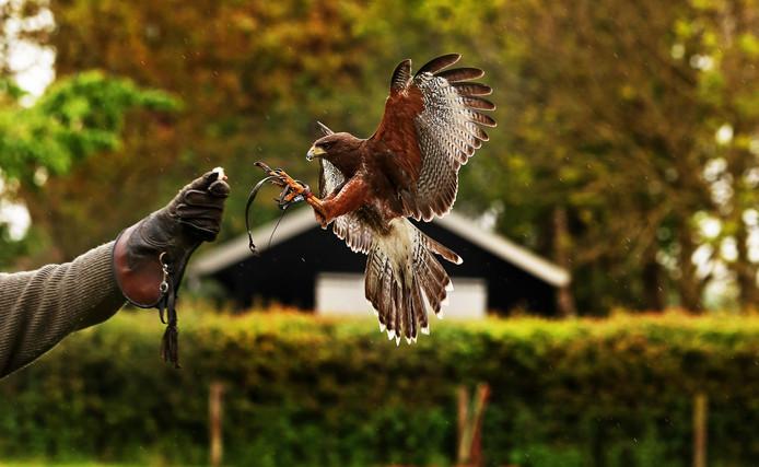 Bestrijding met roofvogels